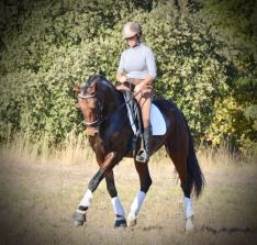 Cheval PSL bai dressage