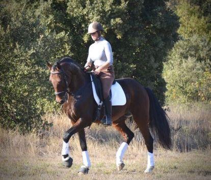 cheval hongre lusitanien