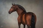 Rubi lusitano stallion