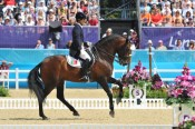 Lusitano olympic bay stallion Rubi AR